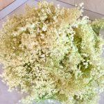 Flori de soc pentru sirop de soc